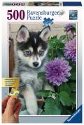 500 Teile Ravensburger Puzzle Gold Edition Putziger Husky 13682