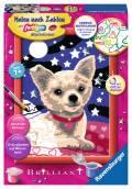 Ravensburger Malen nach Zahlen Classic Sonderserie E Brilliant Lieber Chihuahua 27841