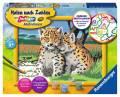Ravensburger Malen nach Zahlen Classic Serie D Kleine Leoparden 28486