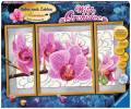 Ravensburger Malen nach Zahlen Premium Serie A Wilde Orchidee 28969